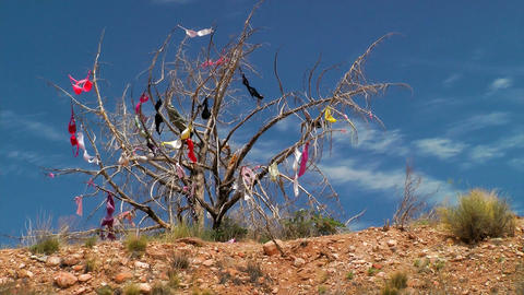 Womens bras hanging in a tree Stock Video Footage