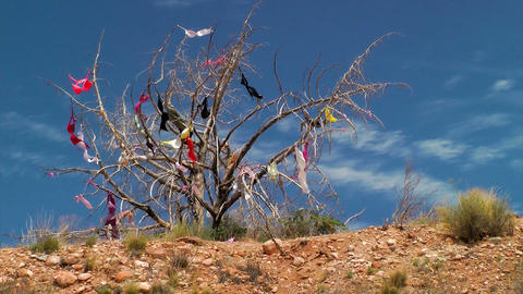Womens bras hanging in a tree Footage