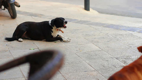 Dog in city Stock Video Footage