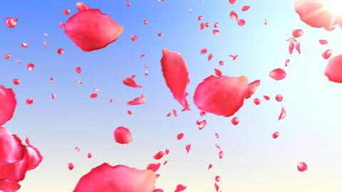 Flying rose petals in the sky with sun. HD 1080. L Animation