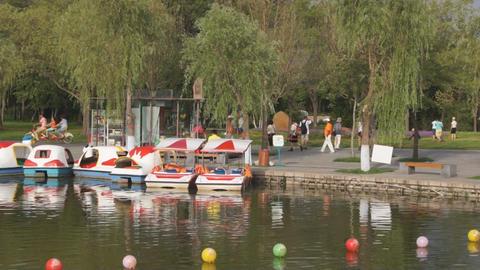 Harbin Pond on Sunny Island Stock Video Footage