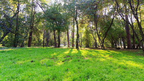 Sunny day in the park. Time Lapse. 4K Stock Video Footage