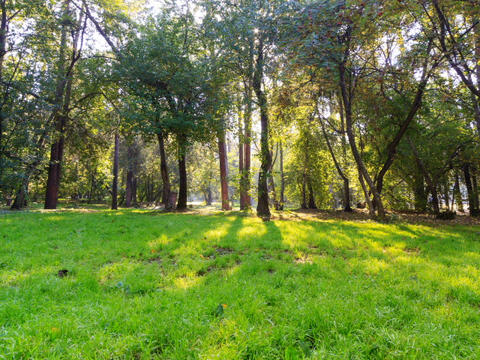 Sunny day in the park. Time Lapse Stock Video Footage