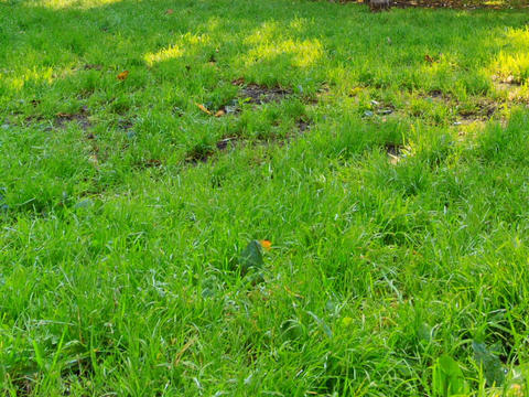 Footprints in sun on the grass. Time Lapse Stock Video Footage