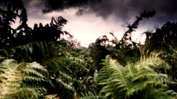 Highland Fern Stock Video Footage