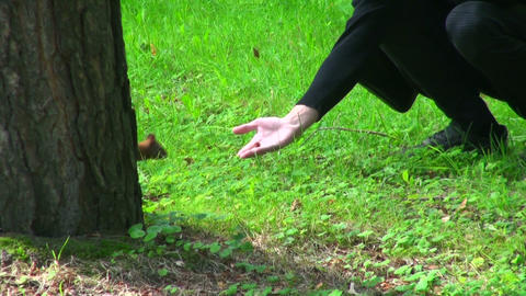 Squirrel jumps on the grass Stock Video Footage