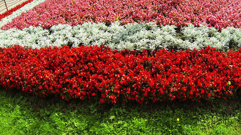 Flowerbed with red flowers Stock Video Footage