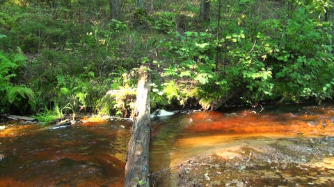 A stream in the woods Stock Video Footage