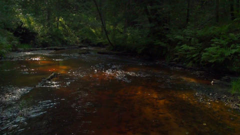 A stream in the woods Footage