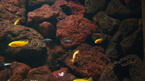 tropical fish Stock Video Footage