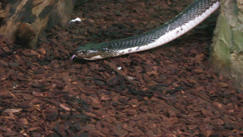 water snake 02 Footage