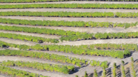 Terraced vineyards in Douro Valley Footage