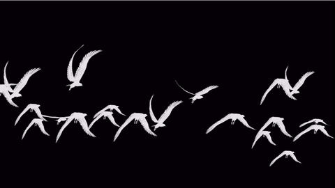 flock of birds fly over,migratory birds Stock Video Footage