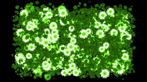 falling green petals & daisy,wedding background,Valentine's Day Animation