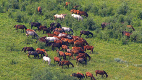Wild Horses Stock Video Footage