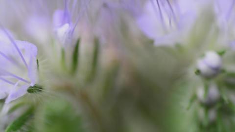 Delicate flowers macro. Motorised dolly shot Stock Video Footage