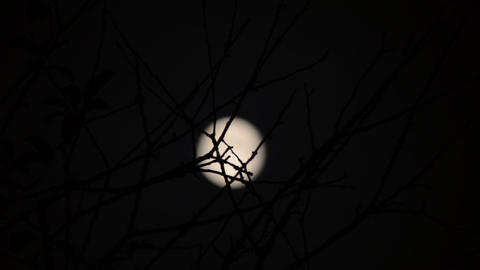 Silhouette of branch, full moon on background. Tim Stock Video Footage
