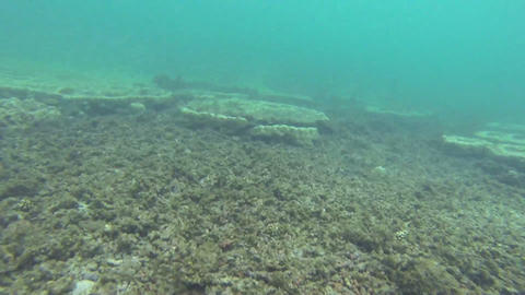 Beautiful view of many fishes on the coral reef on Stock Video Footage