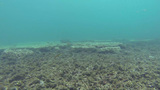 Beautiful view of many fishes on the coral reef on Footage