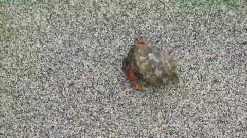 Hermit Crab walking in the sand Stock Video Footage