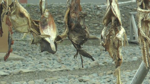 stockfish drying on a wooden rack in iceland Stock Video Footage