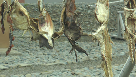 stockfish drying on a wooden rack in iceland Footage