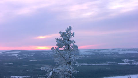 Lonely pine at top of a mountain Stock Video Footage
