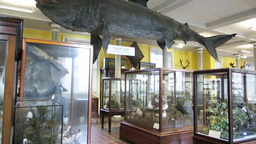 Natural History Museum Dublin 1 Stock Video Footage