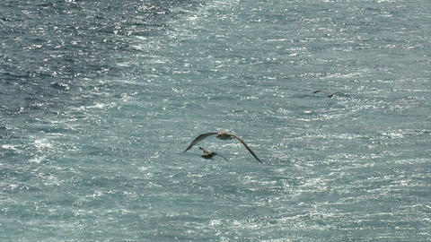 seagull fly 10 Stock Video Footage