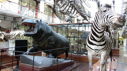 Natural History Museum Dublin 4 stock footage