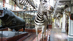 Natural History Museum Dublin 4 Stock Video Footage