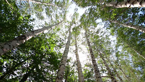 turning tops of summer birch trees with sun shinin Stock Video Footage