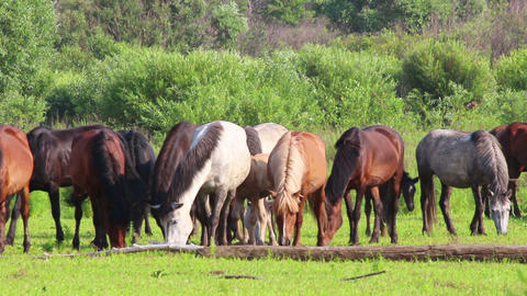horses grazing on pasture Stock Video Footage
