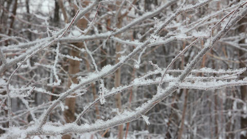 winter tree branch and snow Stock Video Footage