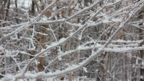 winter tree branch and snow Footage