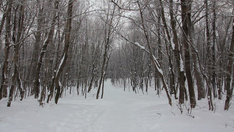 winter forest landscape Stock Video Footage