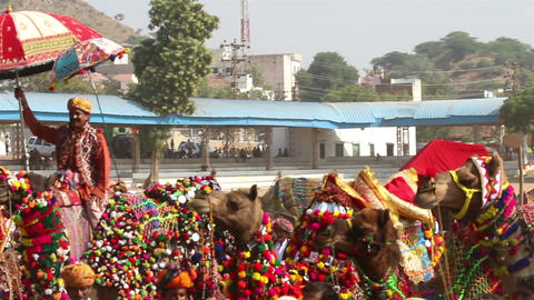 competition to decorate camels at fair in Pushkar  Footage
