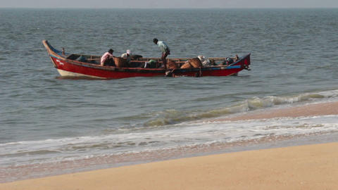 fishermen unload fresh catch of fish on beach - Ke Footage