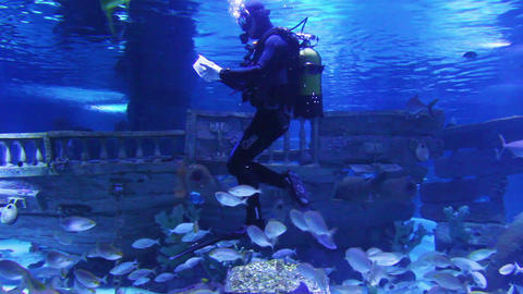 diver in oceanarium feeding fish Stock Video Footage