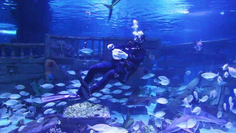 diver in oceanarium feeding fish Footage
