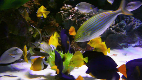 tropical fish feeding underwater Stock Video Footage
