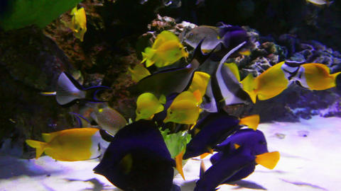 tropical fish feeding underwater Stock Video Footage