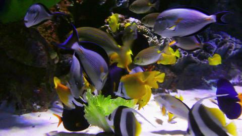 tropical fish feeding underwater Footage