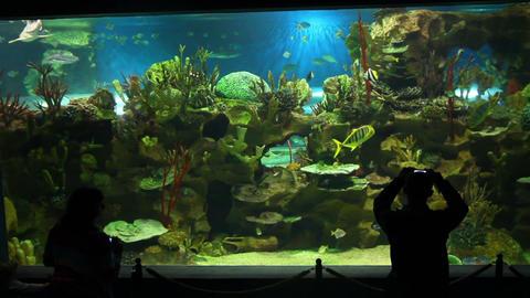 people shooting in oceanarium Stock Video Footage