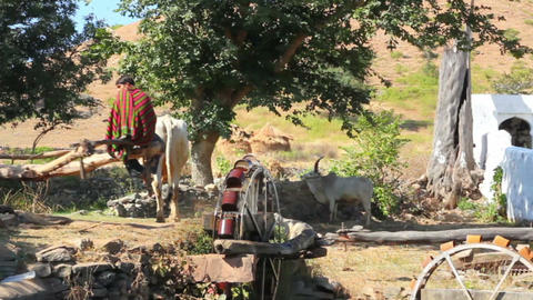well in india - bull turning waterwheel Stock Video Footage