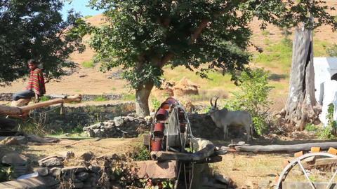 well in india - bull turning waterwheel Footage