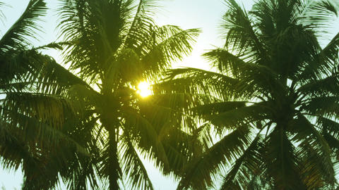 sun is shining throgh palm leaves Stock Video Footage