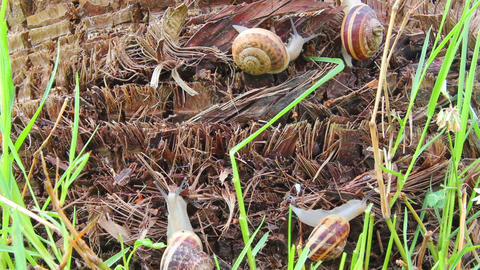 snails in grass Stock Video Footage