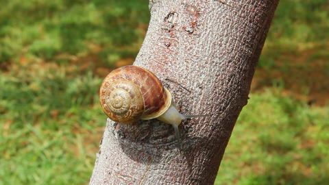 snail on tree Footage