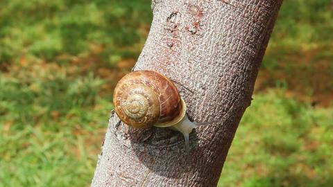 snail on tree Stock Video Footage